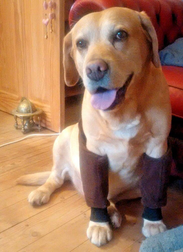 Dog Elbow Protectors Padding Calluses Pressure Sores