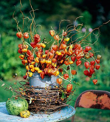 fall arrangement of Chinese lanterns, curly willow & pumpkins-on-a-stick, and garland of grapevine and bittersweet vine wrapping base of container.
