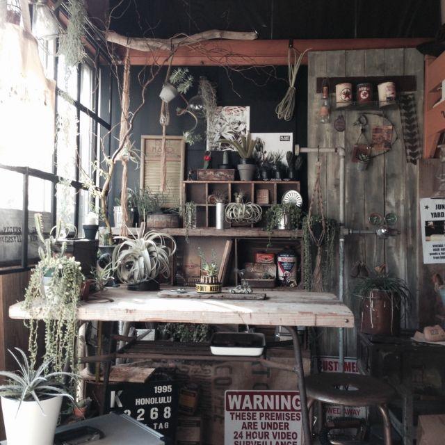 edenさんの、インドアグリーン,DIY,リメイク,サボテン,多肉植物,エアープランツ,雑貨,部屋全体,のお部屋写真