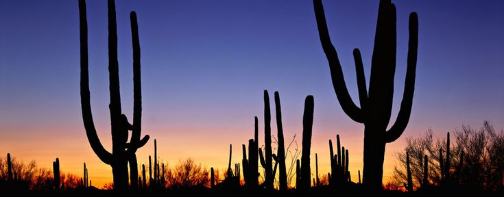 Saguaro National Park - photo by QT Luong / www.terragalleria.com