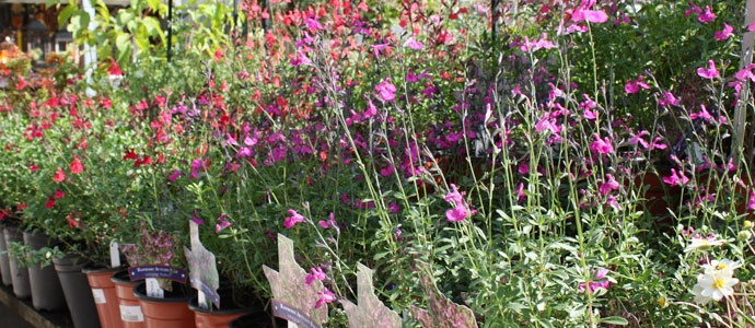 1000 images about low maintenance sun plants for north for Hardy low maintenance shrubs