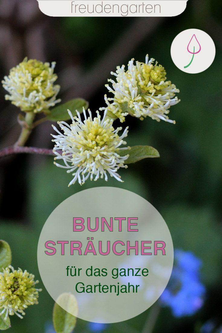 Pin Auf Der Gartenblog Cluster Garten Gartenblogger