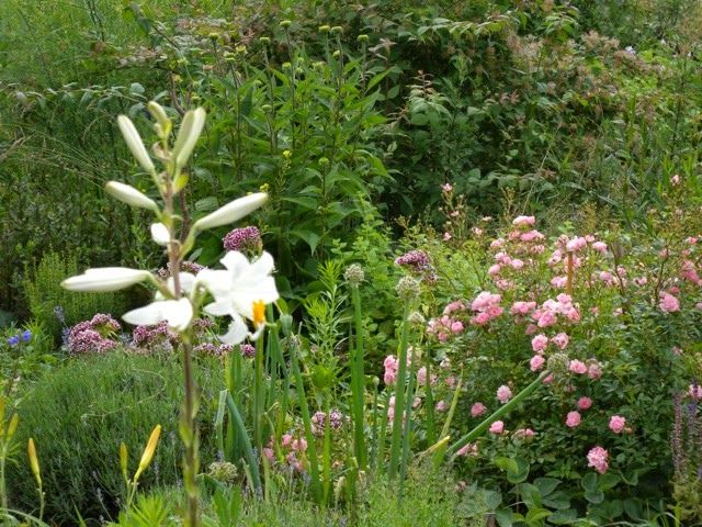 Garten und Landleben: Bauernweisheiten zum Wetter - Juni