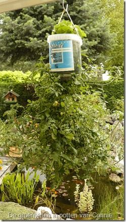 sla en tomaten en maar 1 pot nodig !!