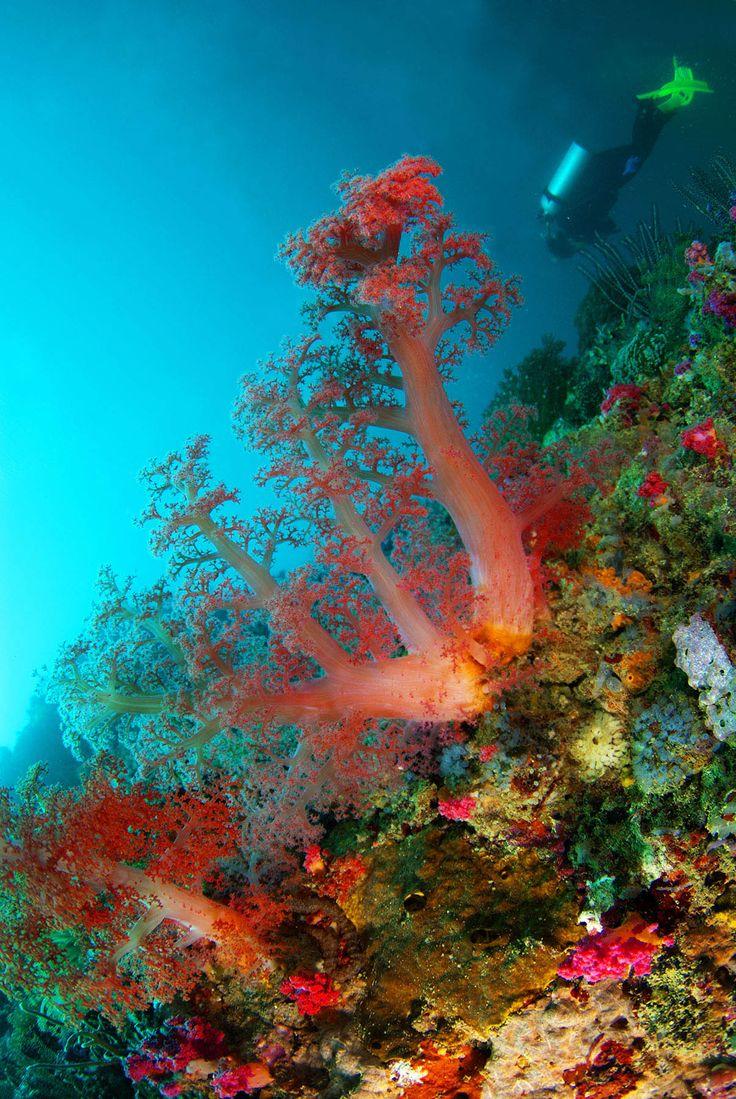 หมู่เกาะสิมิลัน เกาะตาชัย