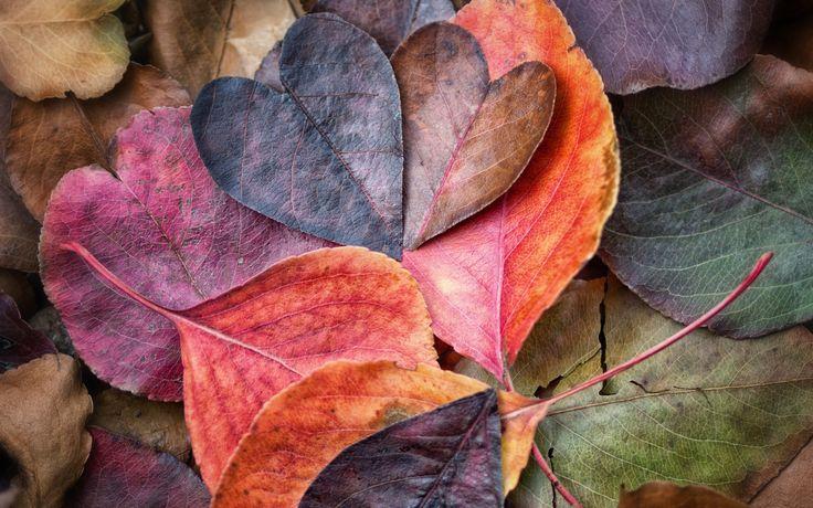Fall in Love Leaves Wallpaper