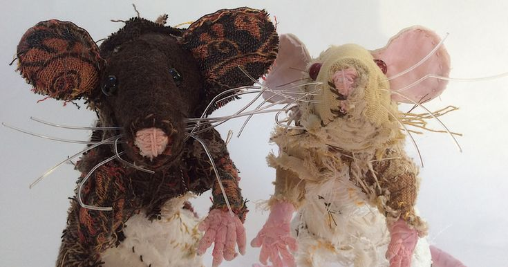 Ravenna and Fawn, the delightful pet rats by Barbara Franc!
