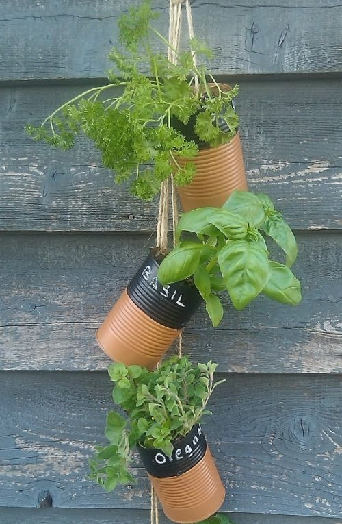 Old cans can be reused for herbs planting on your balcony
