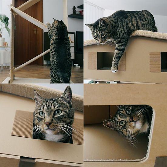 Introducing Catroom: Unique Cat Furniture from Poland