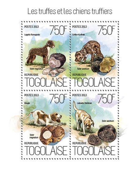 TG 13821 a – Mushrooms and Dogs, (Lagotto Romagnolo, Tuber magnatum, Griffons Korthals, Beagle, Tuber magnatum, Labrador Retriver, Tuber aestivum).