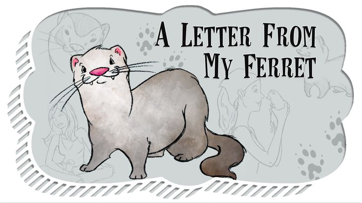 A short story to celebrate the life of a beloved ferret as told by him through a letter that was sent from across the rainbow bridge.