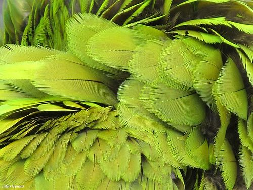 Feather Texture