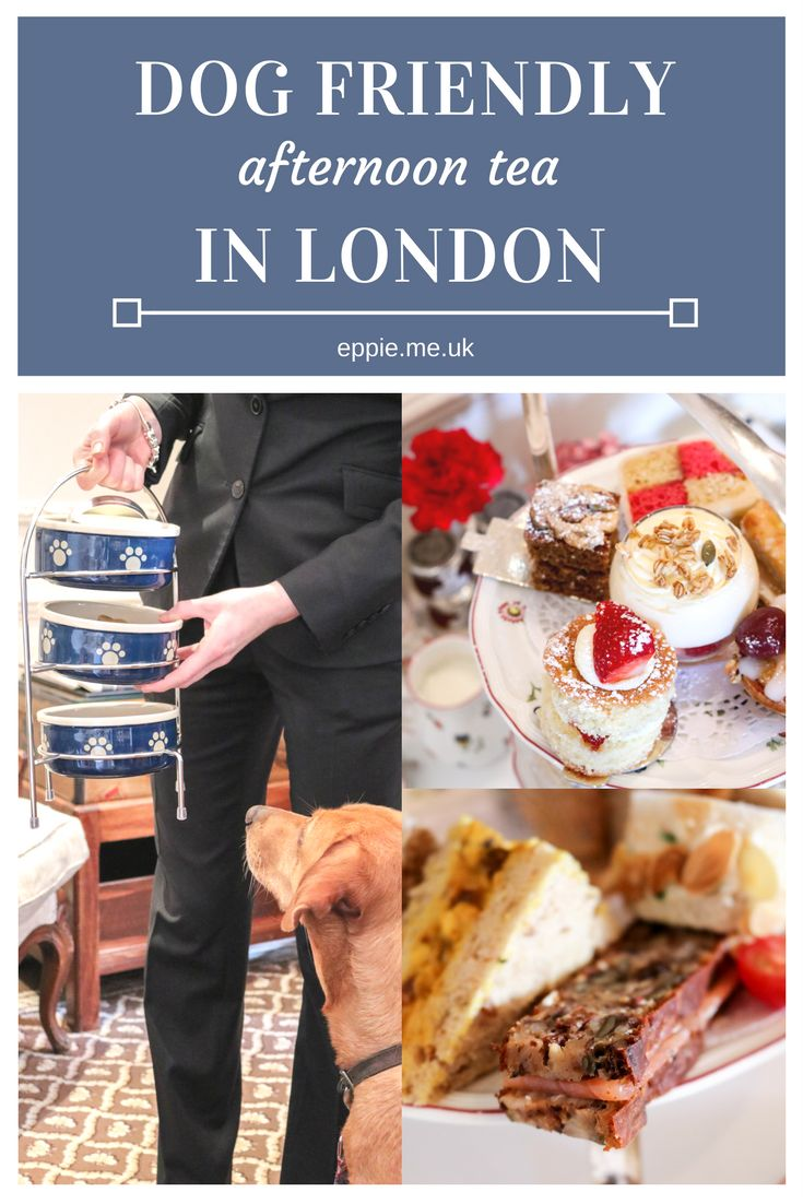 Dog friendly afternoon tea at Egerton House Hotel, Kensington - bring your pooch for tea in London!