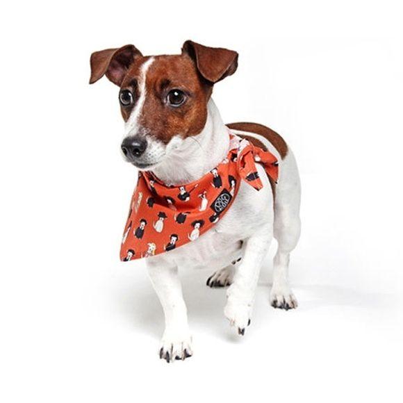 Bandana para Cachorro Laranja - P                                                                                                                                                                                 Mais