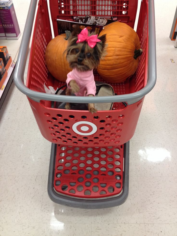 Can you seriously take your dogs shopping like this?!