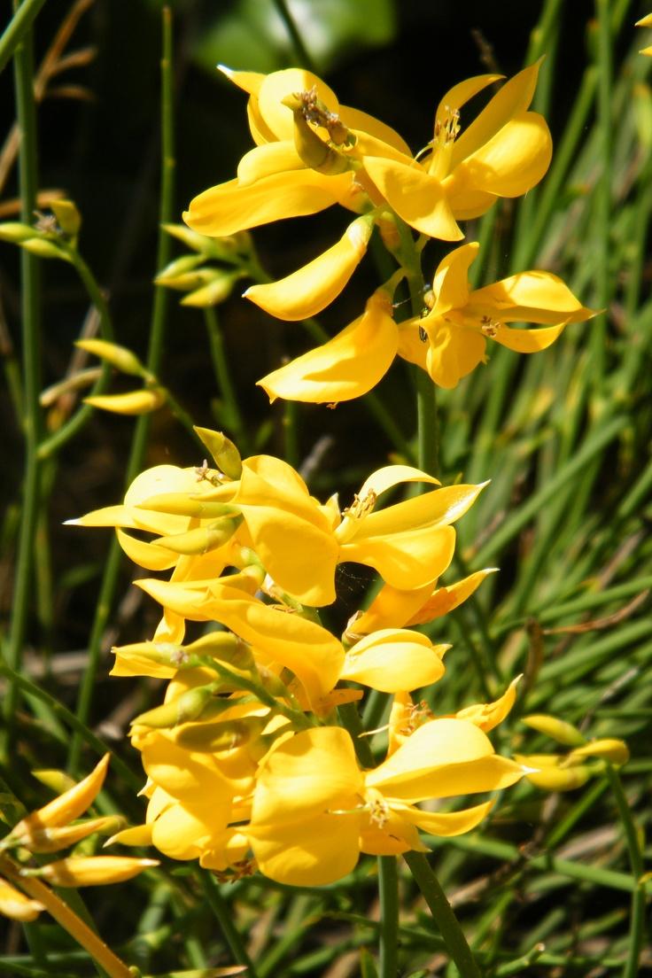 Flores amarillas 3