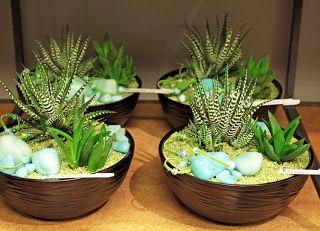 http://holmsundsblommor.blogspot.se/2010/01/sa-dar-ja.html Haworthia, Aloe