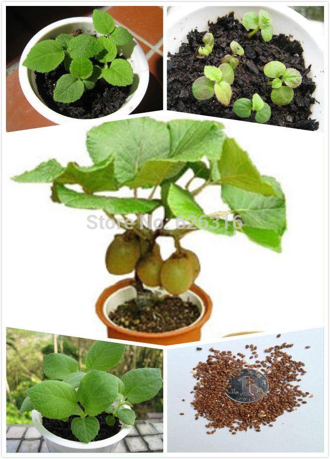 245 best images about garden on pinterest trees bonsai