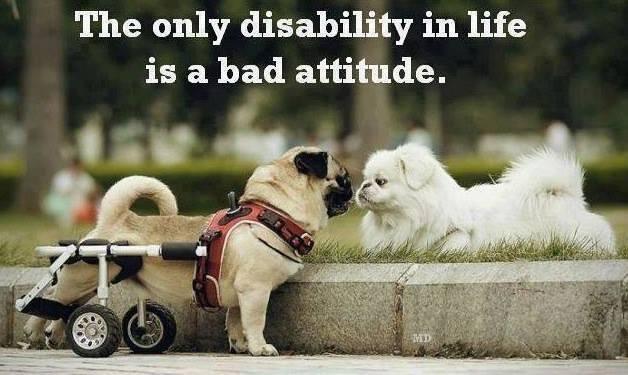 Ah oui ;) RT UnHandicap La seule invalidité dans la vie est une mauvaise attitude (la photo est parfaite)
