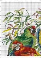 3 tropical birds picture 1. Gallery.ru / Фото #6 - 78 - kento