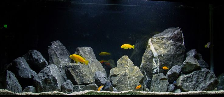 Natural African Cichlid Aquarium with Limestone Rock