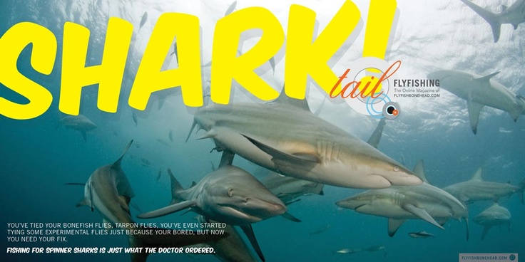 read aboiut spinner sharks on the fly in the April/May edition of Tail fly Fishing Magazine www.flyfishbonehead.com