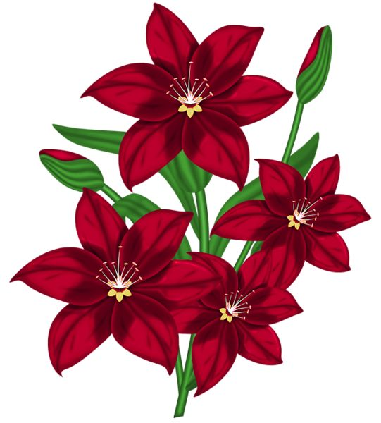 Nice Red PNG Poinsettia Clipart.