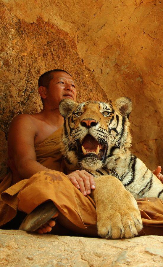 """Tiger Temple, """"Wat Pa Luangta Bua"""", in the Saiyok …"""