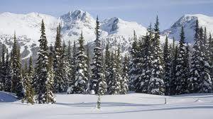 Descargar gratis bosque, taiga, invierno, nieve Fondos de escritorio en la resolucin 1920x1080