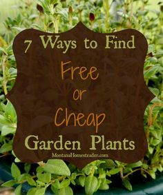 Do you want to expand your vegetable, herb or flower gardens but don't have a lot of cash to spend? Over the years I've figured out quite a few ways to add plants to my gardens and landscaping around the property for free or cheap. Here are our top seven ways to source more plants for our gardens without spending a lot of cash | Montana Homesteader