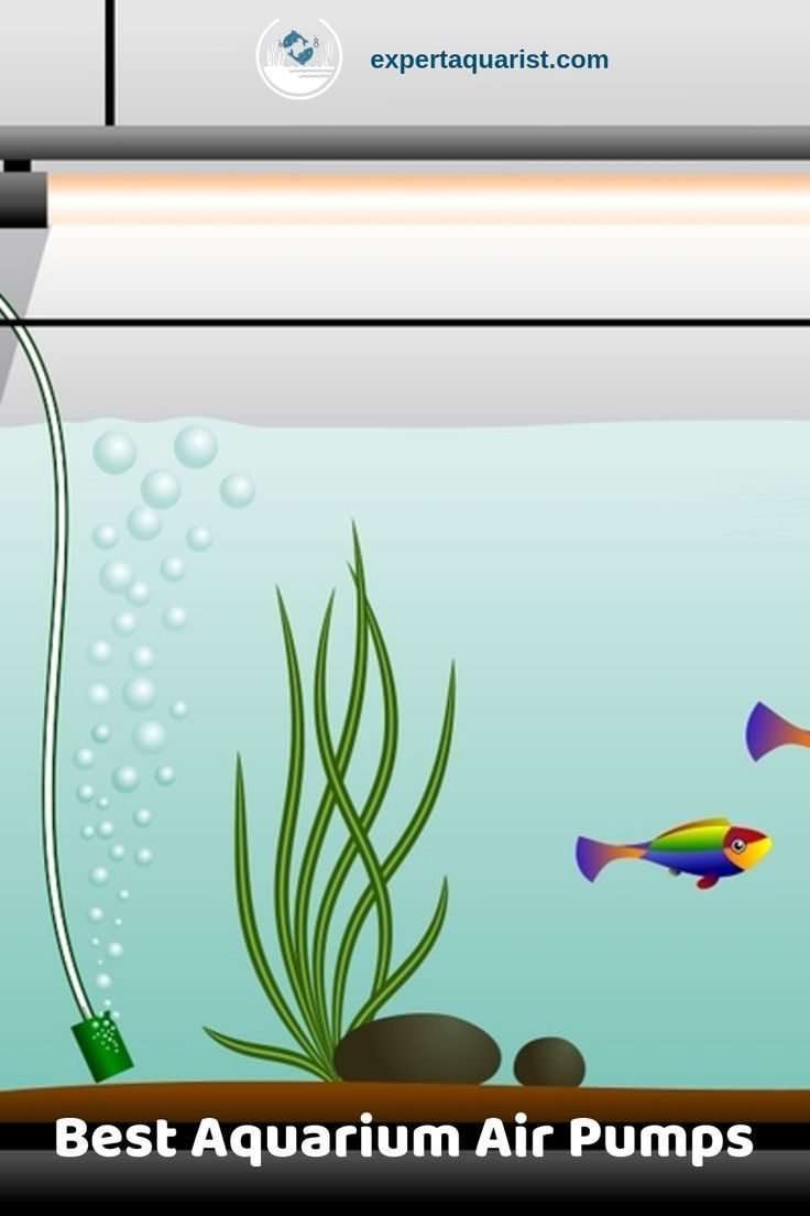 Advice From Our Experts On Picking The Best Aquarium Air Pumps For You Fish Tank Or Aquarium Aquarium Air Pump Air Pump Aquarium