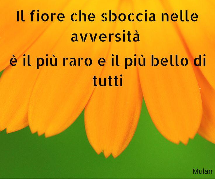 Quote by Mulan #quotes #quote #aforismi #nature #natura #flowers #citazioni #naturequotes #Mulan #Disney