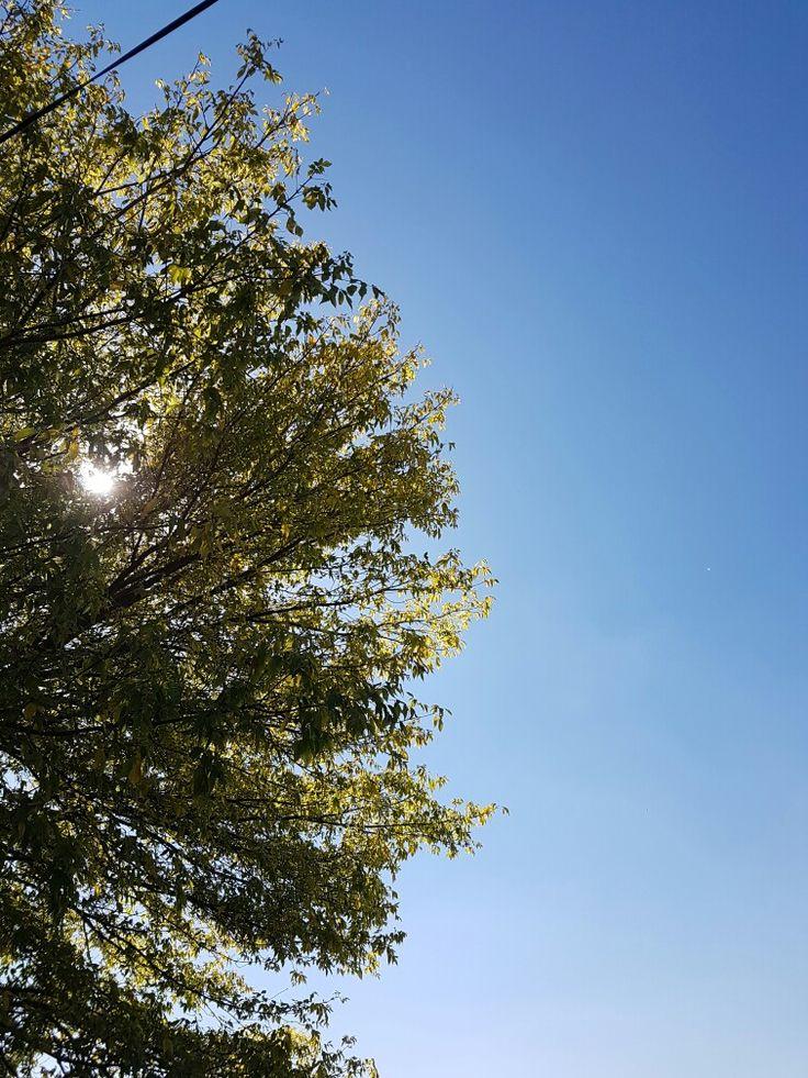 Gökyüzü ve ağaçlar ve dalları ve yaprakları. Hepsi birer görsel şölen. Teşekkürler Allah'ım