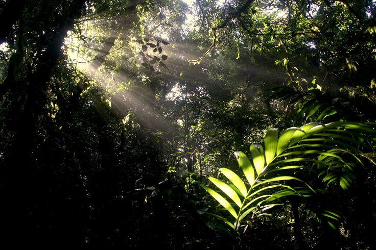 #Sonnenaufgang in Costa Rica im #Regenwald - die Natur hatte wohl einen guten Tag...