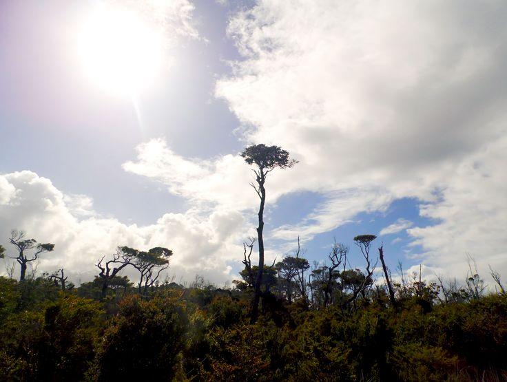 #Naturaleza #Chiloe