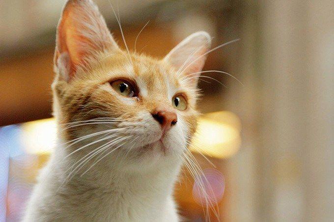 ドキュメンタリー映画『猫が教えてくれたこと』が、2017年11月よりシネスイッチ銀座、恵比寿ガーデンシネマほかにて順次公開される。ヨーロッパとアジアの文化の交流地点であり、数千年ものあいだ世界有数の大...