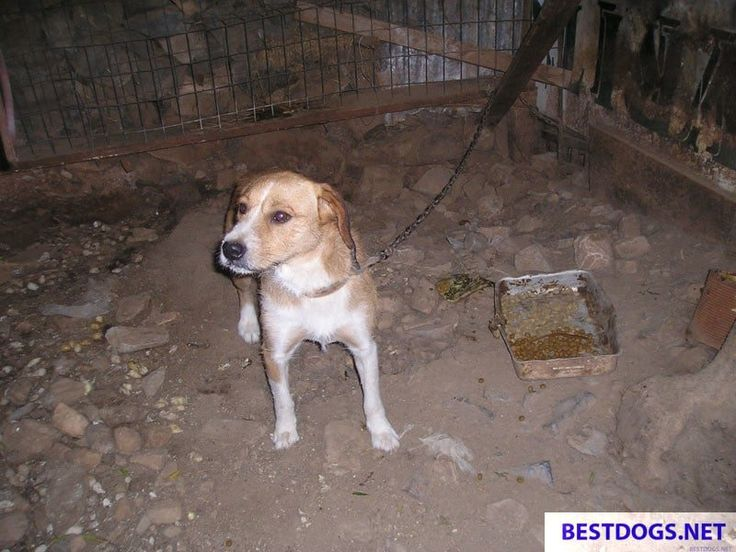 Animal Welfare Report Crete