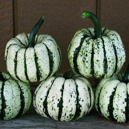 vegetable seeds www.bjgseed.com