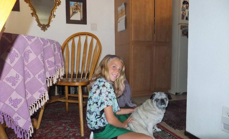 Pug dog for Adoption in Dana Point, CA. ADN-582737 on PuppyFinder.com Gender: Female. Age: