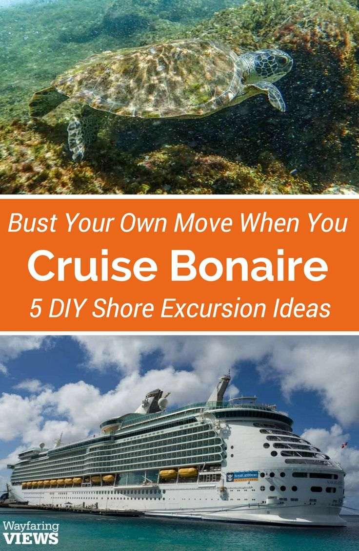 Create your own shore excursion when you cruise Bonaire. Check out this list of things to do in Bonaire for your visit to the port.