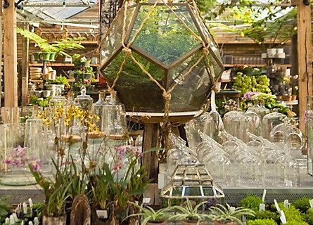 How-To: Create & Maintain Terrariums