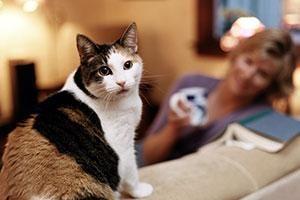 A Poison Safe Home #AnimalHospital #Veterinarian #Pets #KAH #FrederickMaryland #KingsbrookAnimalHospital #Vet #ToxicToPets #PoisonControl #PetSafety #AnimalPoisonControl #ASPCA