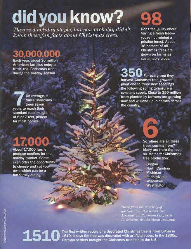 Fast Facts About Where Christmas Trees Come From Winter