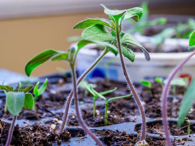 17 best images about plantes jardinage on pinterest cars. Black Bedroom Furniture Sets. Home Design Ideas