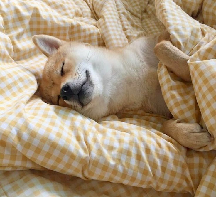 Картинки щенки милые и красивые спящие комната