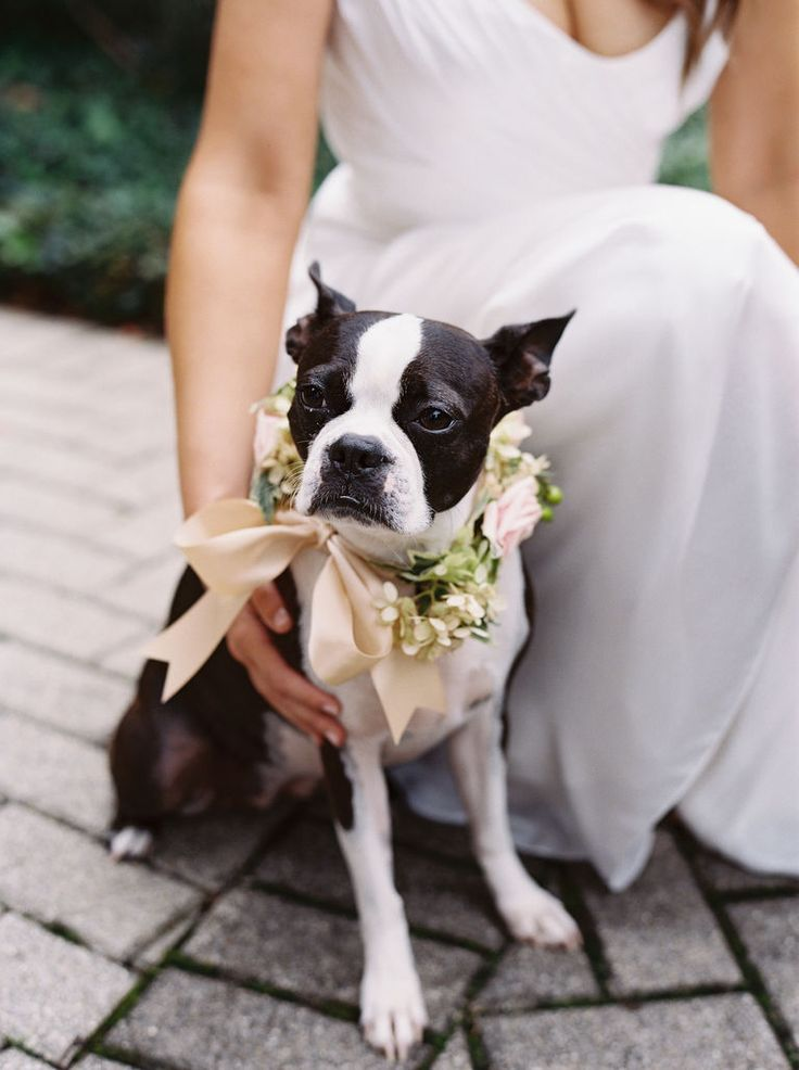 Ring Pillows For Dogs In Weddings