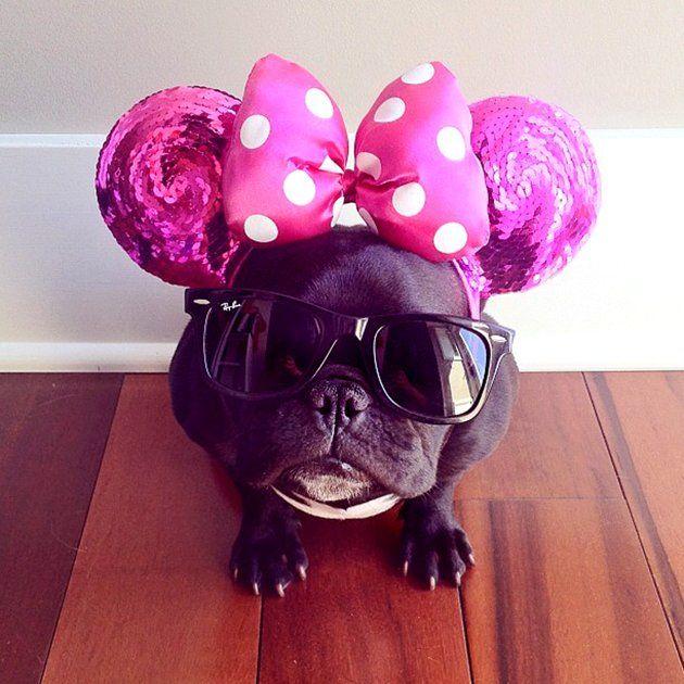 Trotter The Hipster Bulldog