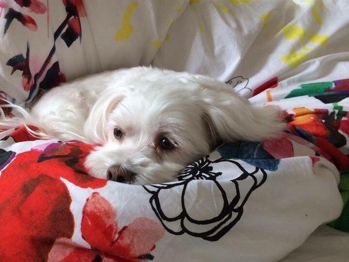 Min dejlige Izabella , 8 år nu ❤️