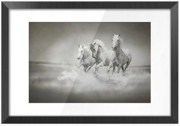 Plakat w Ramie Stado białych koni biegnących przez wody
