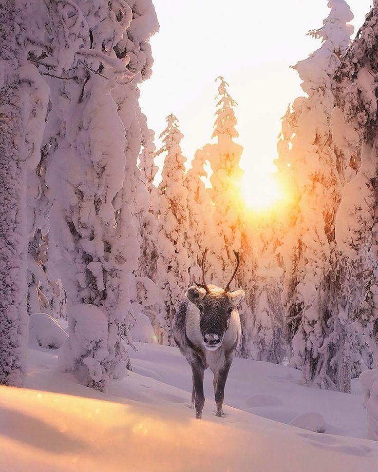 fotos-alimentando-animales-salvajes-finlandia-konsta-punkka-2 (15)
